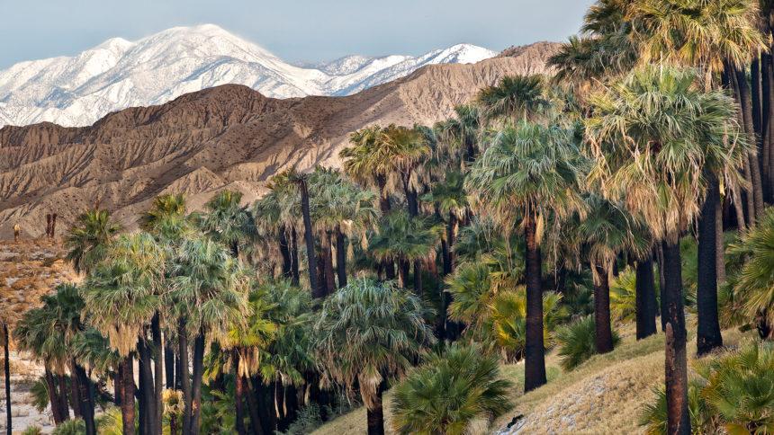 Thousand Palm Oasis