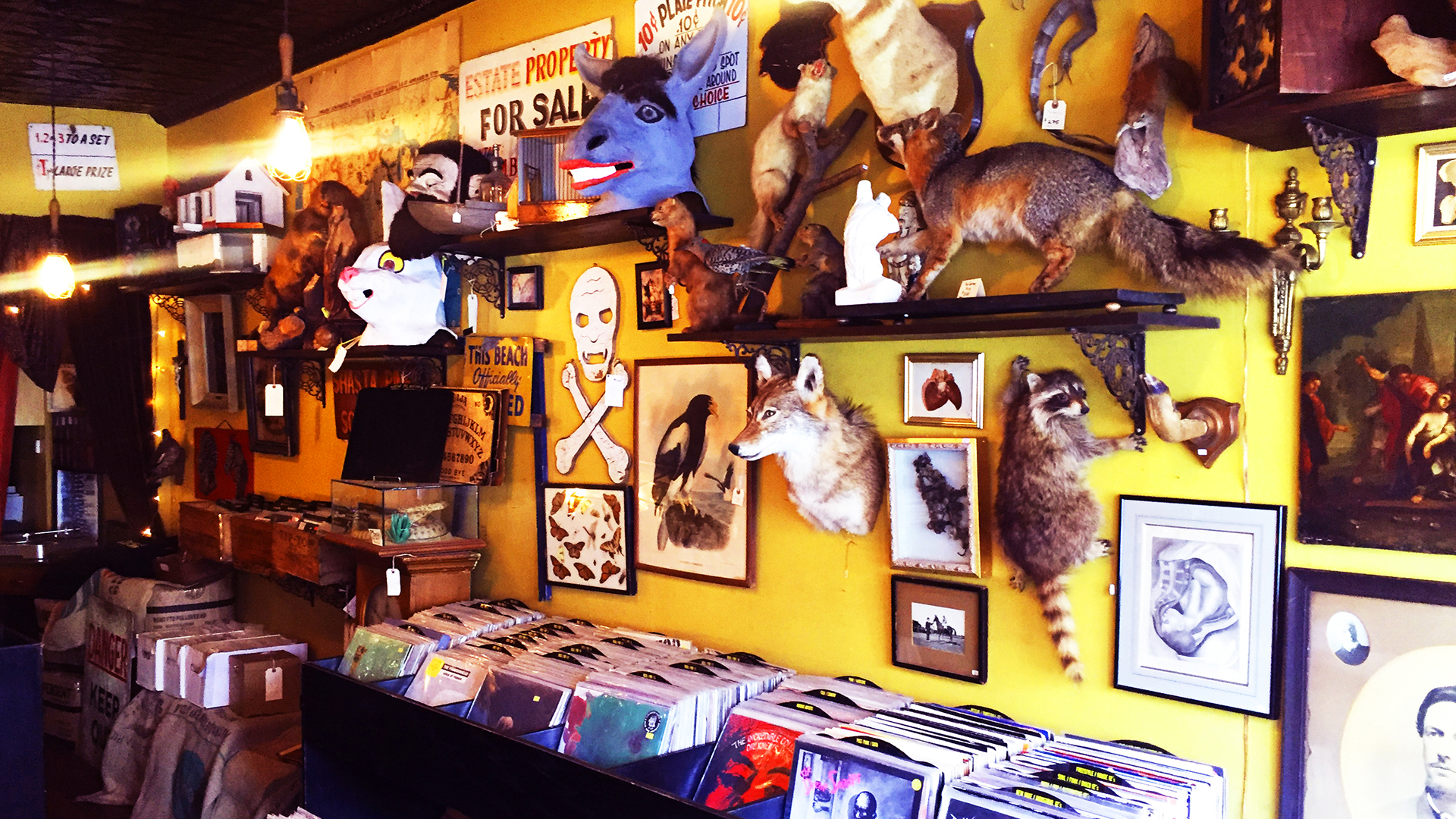 Stuffed animal heads and other body parts adorn a wall above shelves of used records at Black Gold Records in New York City