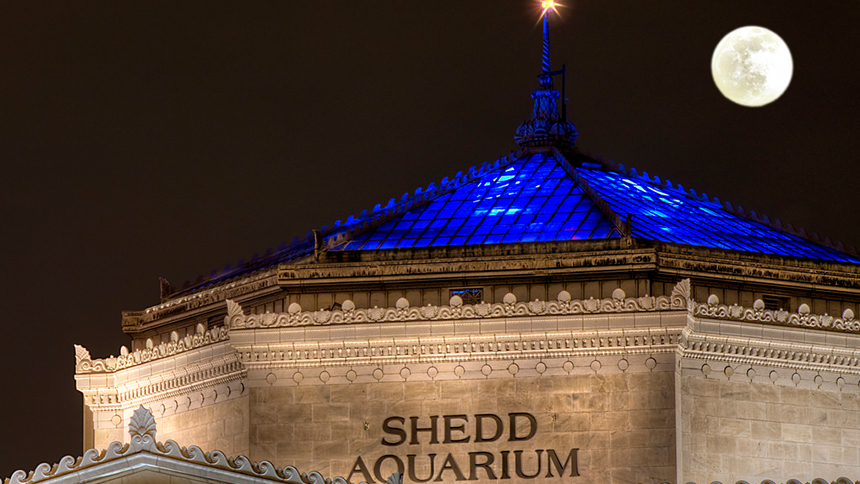Shedd Aquarium with full moon in Chicago, Illinois