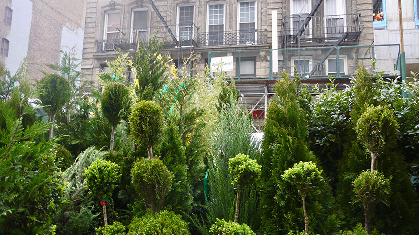 Shrubbery for sale in New York City